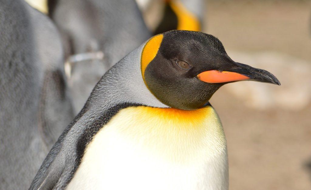 Server administration course: Part 1 - Managing a Linux Server